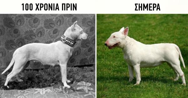 Πώς έχουν εξελιχθεί οι ράτσες των σκύλων τα τελευταία 100 χρόνια