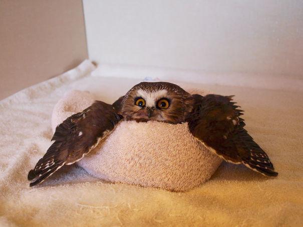 πτηνά ζωάκια που απλά έχουν λιώσει ! ζωάκια