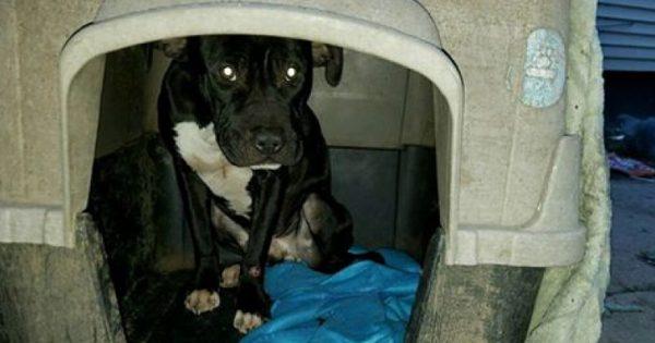 Τον παράτησαν αλυσοδεμένο έξω στο κρύο και ήταν νηστικός για μέρες. Όταν τον βρήκαν οι γείτονες, σοκαρισμένοι τον είδαν να…