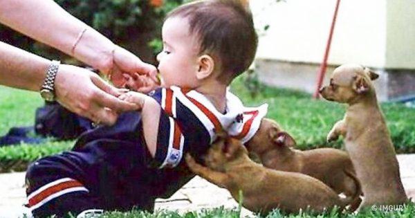 16 φορές που τα ζώα μας έδειξαν το καλό παράδειγμα