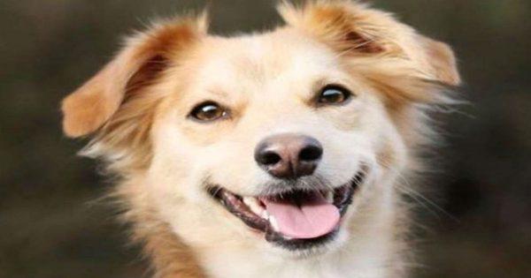 Γιατί τα σκυλιά μας κοιτάζουν μέσα στα μάτια