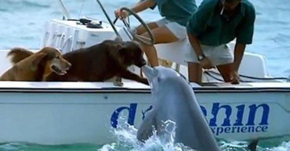 σκυλιά δελφίνια δελφίνι πλησιάζει ένα σκάφος με 2 σκυλιά δελφίνι