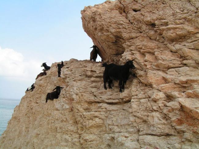 τα κατσίκια είναι οι καλύτεροι ορειβάτες κατσίκια φωτογραφίες κατσίκια κατσίκι φωτογραφίες κατσίκι κατσικάκια και ορειβασία κατσικάκια κατσικάκι
