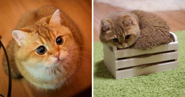 Γνωρίστε τον Hosico, τον αληθινό παπουτσωμένο γάτο!