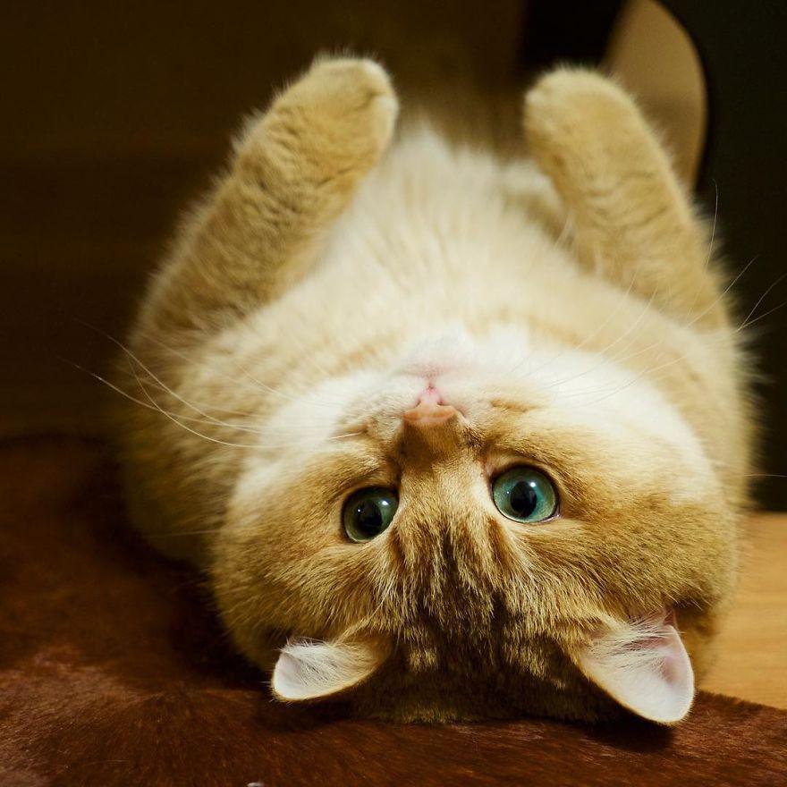 φωτογραφίες από γάτες παππουτσομένος γάτος γάτος γάτες Γάτα
