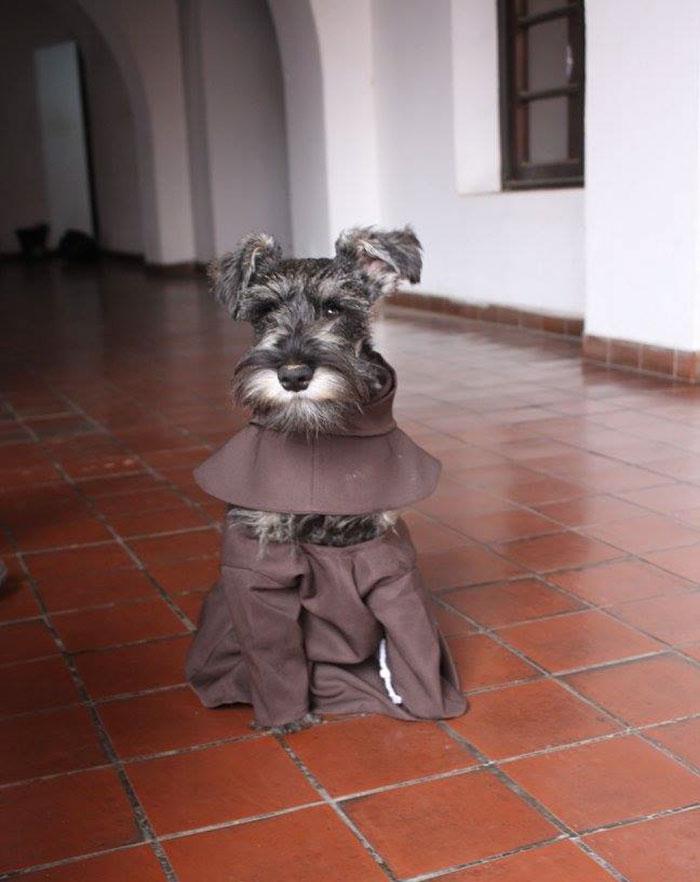 Σκύλος Αδέσποτος σκύλος