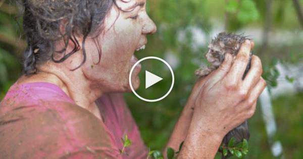 Γατάκι που πνίγεται νιαουρίζει απελπισμένα για βοήθεια. Η ηρωική πράξη της γυναίκας που το έσωσε, έχει συγκλονίσει τον πλανήτη!