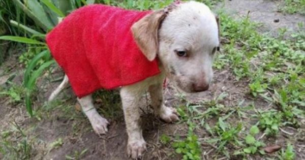 Βρήκε ένα μικροσκοπικό κουτάβι να τρέμει έξω απ'το σπίτι του. Μόλις όμως πρόσεξε το κεφάλι του, πάγωσε…