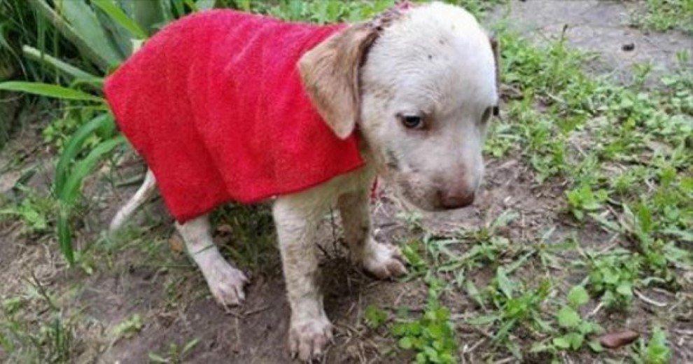 Σκύλος σκυλάκι πάγωσε... μικροσκοπικό κουτάβι κουτάβι Βρήκε ένα μικροσκοπικό κουτάβι να τρέμει έξω απτο σπίτι του. Μόλις όμως πρόσεξε το κεφάλι του