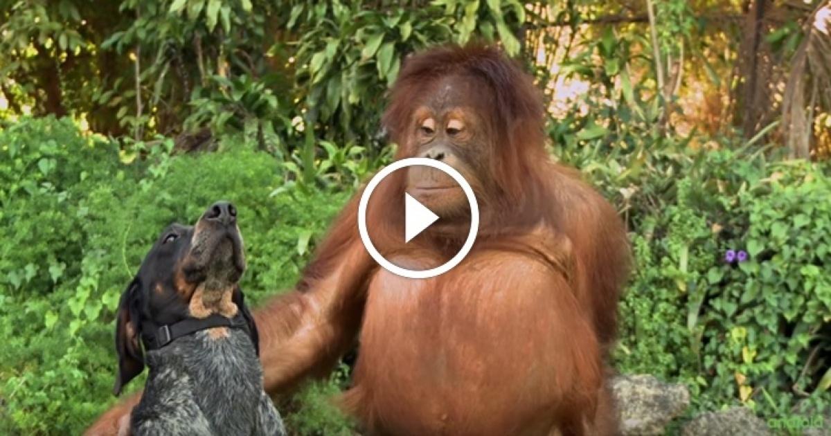Σκύλος Διαρκεί ΜΟΝΟ 1 λεπτό αλλά θα σας κάνει να ανατριχιάσετε: Φίλοι για πάντα! Ένα υπέροχο βίντεο που αξίζει να δείτε!