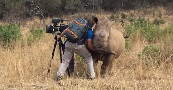 Η μαγική στιγμή που θηλυκός ρινόκερος πλησιάζει έναν κάμεραμαν για να της χαϊδέψει την κοιλιά. Δείτε το καταπληκτικό βίντεο!