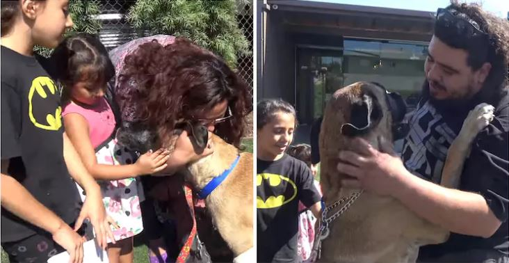 σκύλος είχε χαθεί Σκύλος επανασύνδεση με την οικογένεια