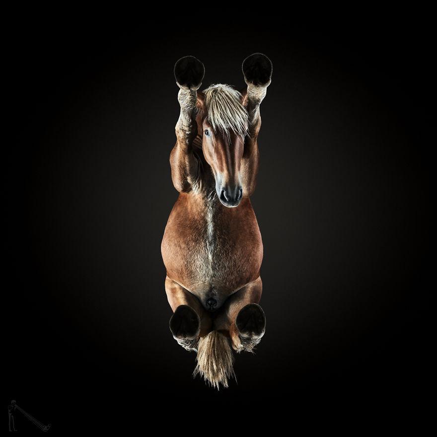 Φωτογράφιες αλόγων από μια περίεργη οπτική γωνία που δεν έχετε ξαναδεί! άλογα