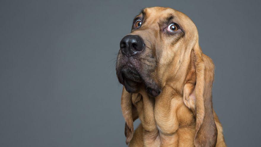 Σκύλος σκυλιά Αυτός ο φωτογράφος σκύλων ειδικεύεται στις χαζές φάτσες! αστείες φάτσες ζώων αστεία πρόσωπα