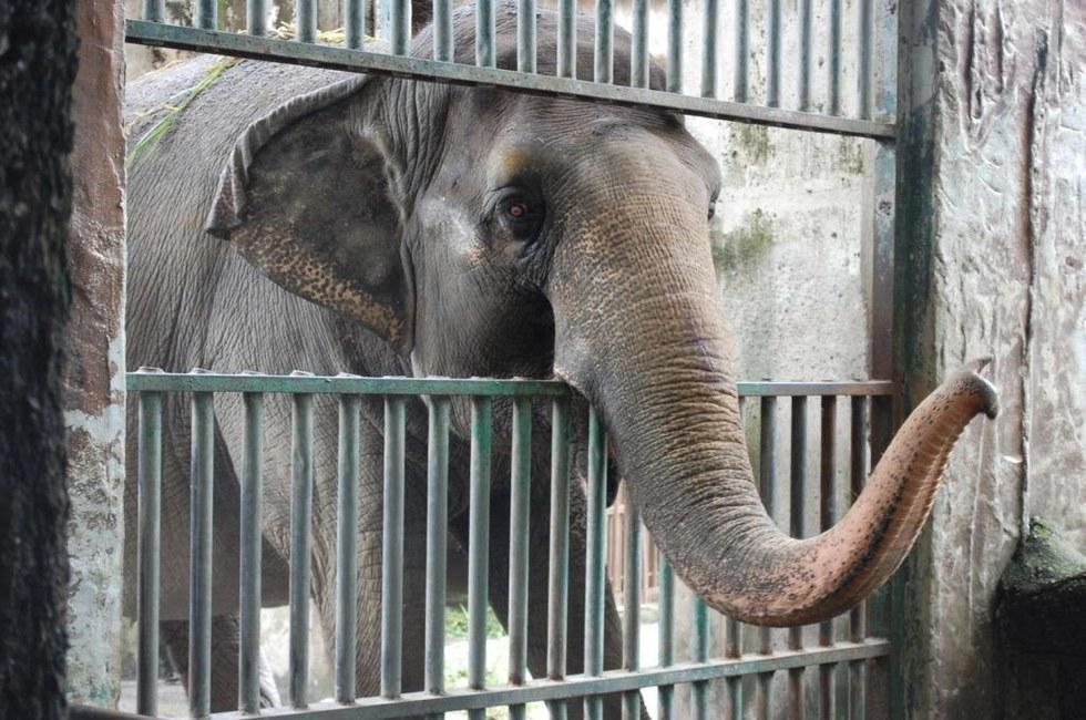 ελέφαντες ελέφαντας Aυτός ο ελέφαντας ζει μόνος του τα τελευταία 40 χρόνια