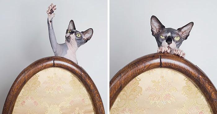 φωτογραφίες γατών Δημιουργικές φωτογραφίες γατών από την Catherine Holmes γάτος γατιά γάτες Γάτα