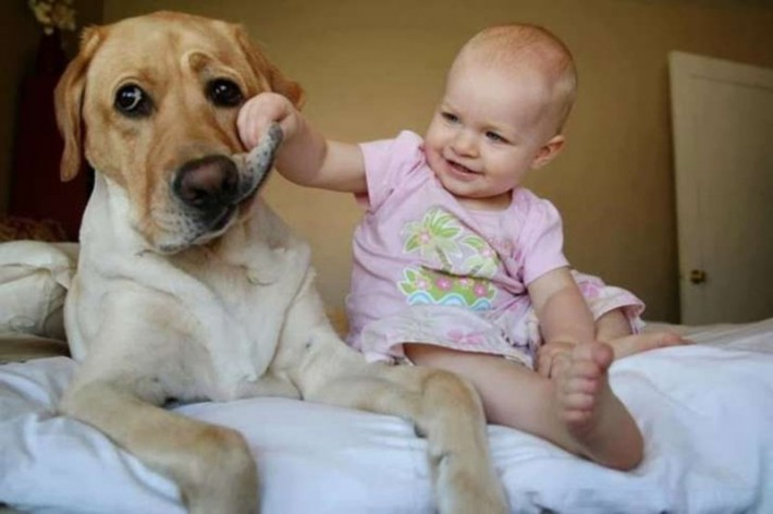 το παιδί τους μόνο του με το κατοικίδιο της οικογένειας Δείτε ΤΙ γίνεται όταν οι γονείς ξεχνάνε το παιδί τους μόνο του με το κατοικίδιο της οικογένειας