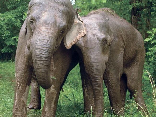 20 συγκλονιστικές ιστορίες που αποδεικνύουν ότι και τα ζώα έχουν αισθήματα. Με την τελευταία θα δακρύσετε...