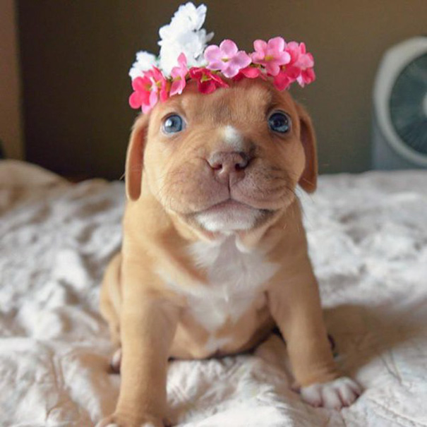 Σκύλος σκύλοι σκυλάκι Κουτάβια που παραείναι γλυκά για να είναι αληθινά κουτάβια γλυκά κουτάβι