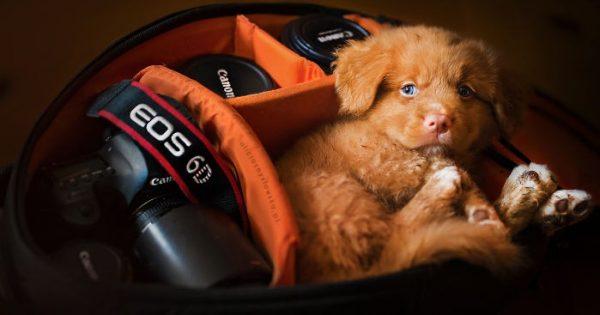 Μερικά κουτάβια αποφάσισαν να κοιμηθούν στην τσάντα μιας φωτογράφου!