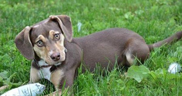 Σκύλος σώζει κοριτσάκι 3 ετών που ξεπάγιαζε σε ένα χαντάκι