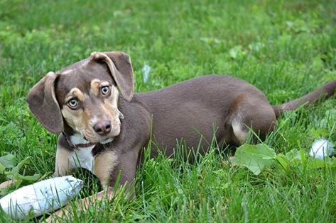 Σκύλος σώζει κοριτσάκι 3 ετών που ξεπάγιαζε σε ένα χαντάκι σκύλος σώζει κοριτσάκι Σκύλος σκύλοι