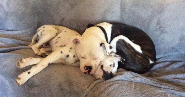 Νευρική σκυλίτσα βρήκε επιτέλους έναν φίλο που την έκανε να ηρεμήσει