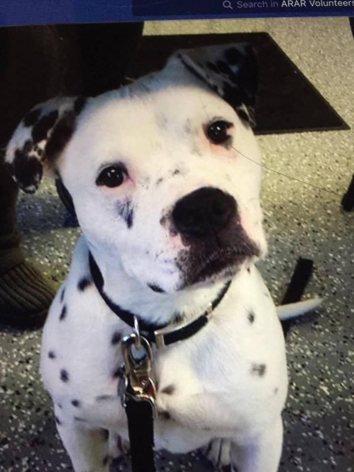 Σκύλος σκύλοι σκυλίτσα Νευρική σκυλίτσα βρήκε επιτέλους έναν φίλο που την έκανε να ηρεμήσει