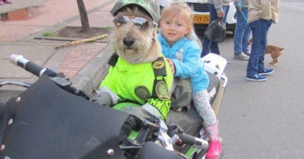 Αδέσποτο σκυλί βρίσκει δουλειά στο αστυνομικό τμήμα της περιοχής του