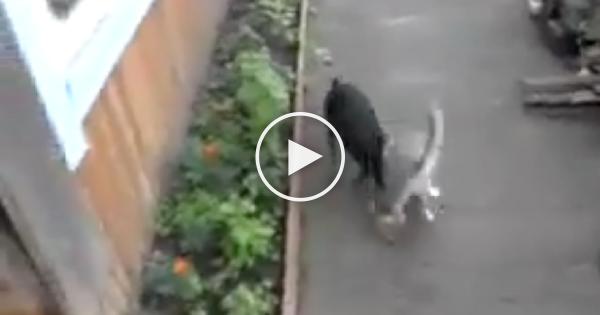 Λέει στο σκύλο της να φέρει την γάτα στο σπίτι! Δείτε ΤΙ έκανε αυτός και θα κλαίτε από τα γέλια!