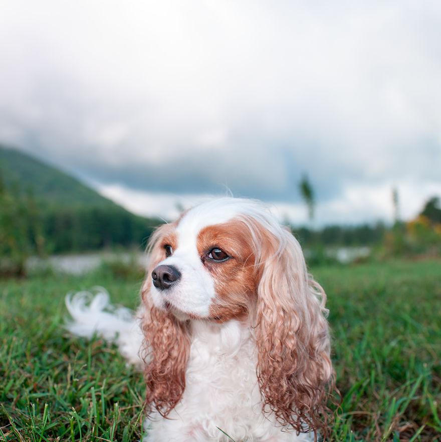 σκύλος και άνοιξη Σκύλος σκύλοι Σκυλάκια που παίζουν και απολαμβάνουν την άφιξη της άνοιξης σκυλάκια