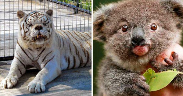 20 ζώα με σύνδρομο Down που θα σας ζεστάνουν την καρδιά