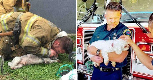 Χίλια ΜΠΡΑΒΟ! Πυροσβέστες κάνουν τεχνητή αναπνοή σε κουτάβι, για 20 συνεχόμενα λεπτά και του σώζουν τη ζωή!
