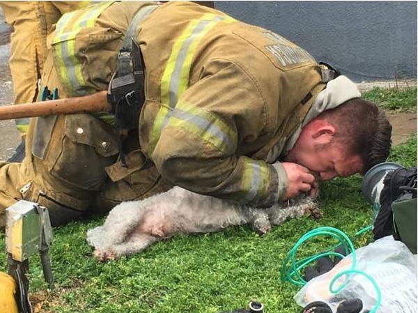 Χίλια ΜΠΡΑΒΟ! Πυροσβέστες κάνουν τεχνητή αναπνοή σε κουτάβι τεχνητή αναπνοή σε κουτάβι τεχνητή αναπνοή Σκύλος σκύλοι κουτάβια κουτάβι για 20 συνεχόμενα λεπτά και του σώζουν τη Ζωή!