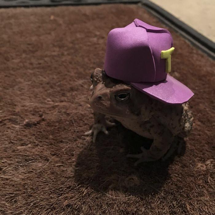 Βάτραχος βατράχια Αυτός ο βάτραχος ερχόταν συνέχεια στη βεράντα ενός άνδρα οπότε αυτός άρχισε να του φτιάχνει μικροσκοπικά καπέλα