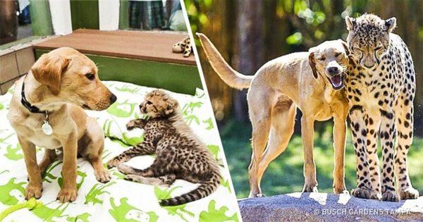 15 φωτογραφίες μαζί με τις ιστορίες τους από ζώα που μεγάλωσαν μαζί