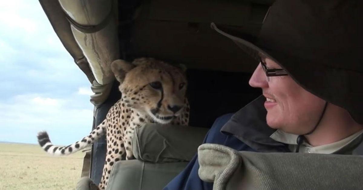τσιτάχ Όταν ένα άγριο τσιτάχ εισβάλει στο αυτοκίνητό σου… (Video)