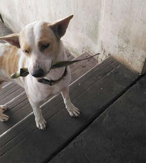 Σκύλος σκύλοι Αυτός ο αδέσποτος σκύλος φέρνει δώρα στην γυναίκα που τον ταΐζει Αδέσποτος σκύλος αδέσποτος αδέσποτοι σκύλοι αδέσποτο Αδέσποτα