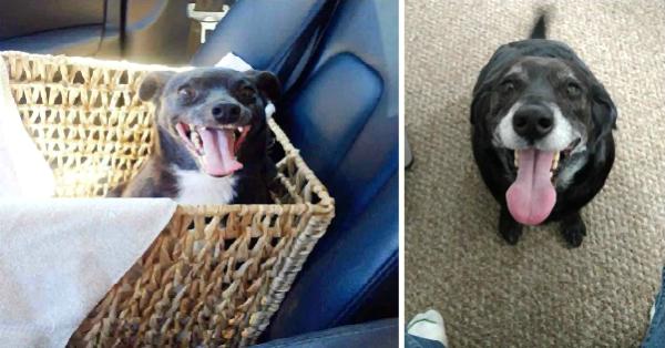 Η απερίγραπτη χαρά ενός αδέσποτου σκύλου τη στιγμή της υιοθεσίας του, μέσα από 31 αξιολάτρευτα παραδείγματα.