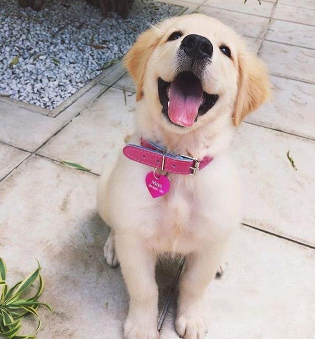 υιοθεσία αδέσποτου αδέσποτος σκύλος υιοθεσία αδέσποτοι σκύλοι αδέσποτο Αδέσποτα