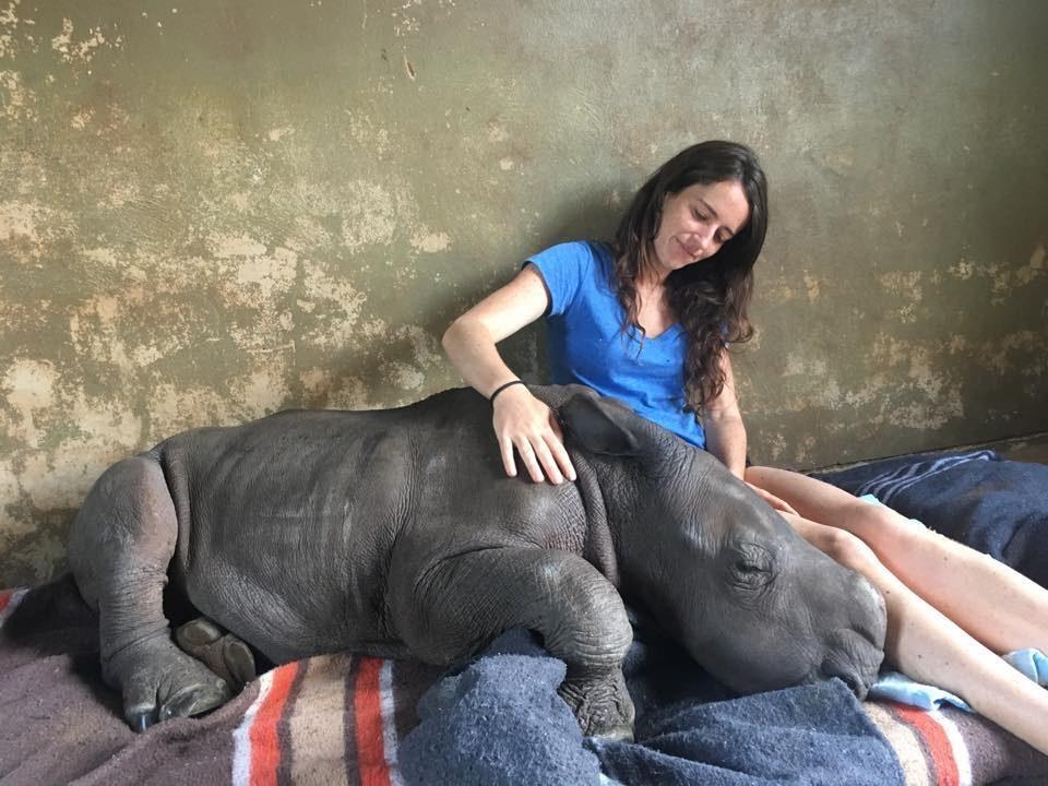 ρινόκερος ρινόκεροι Μικρός ρινόκερος που δέχτηκε μαχαιριά αγκαλιάζει τους διασώστες του μικρό ρινόκερος
