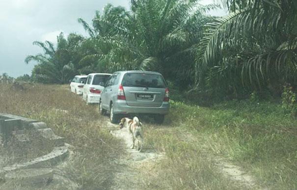 Σκύλος ακολουθεί την πομπή που μεταφέρει την νεκρή φίλη του για 3 χιλιόμετρα ώστε να πει αντίο Σκύλος σκύλοι