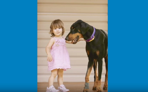 σκύλος δάγκωμα Σκύλος σκύλοι πάγωσε... Ο σκύλος δάγκωσε την 17 μηνών κόρη της και την πέταξε μακρυά. Μόλις κατάλαβε ΓΙΑΤΙ το είχε κάνει ο σκύλος δάγκωσε