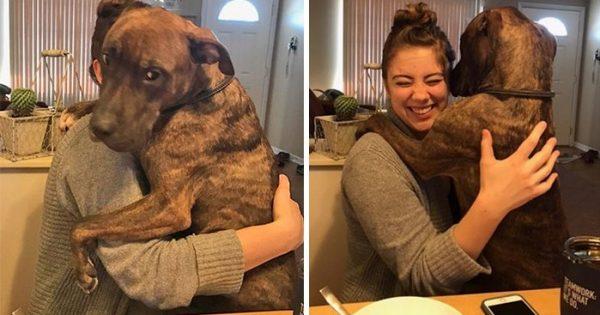 Σκύλος που υιοθετήθηκε πριν 1 χρόνο δείχνει την ευγνωμοσύνη του κάθε μέρα αγκαλιάζοντας την μαμά του