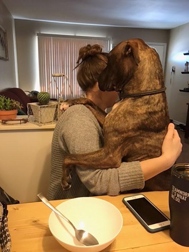 Σκύλος που υιοθετήθηκε πριν 1 χρόνο δείχνει την ευγνωμοσύνη του κάθε μέρα αγκαλιάζοντας την μαμά του σκύλος που υιοθετήθηκε Σκύλος σκύλοι