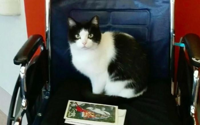 μια γάτα που βρήκε δουλειά σε ένα γηροκομείο! Γνωριστε την Oreo γάτα που βρήκε δουλεία σε ένα γηροκομείο