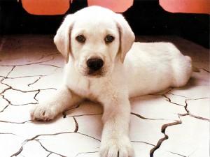 dogcharacter1-300x225