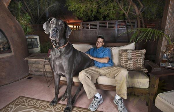 σκυλιά μεγαλόσωμα σκυλιά