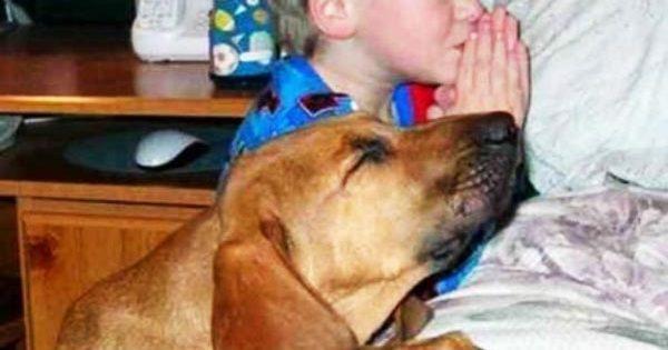 15 σκυλιά που θα έκαναν τα πάντα για τα παιδιά!