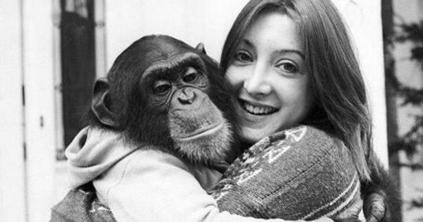Η συγκινητική αντίδραση του χιμπατζή, όταν η γυναίκα που τον φρόντιζε του είπε ότι έχασε το μωρό της!